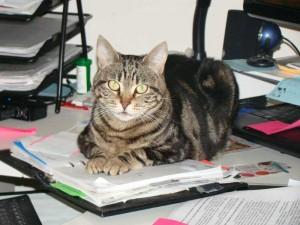 Tití sobre el escritorio